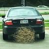 Tumbling tumble weeds