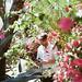 Moorten Botanical Garden by madebysohn