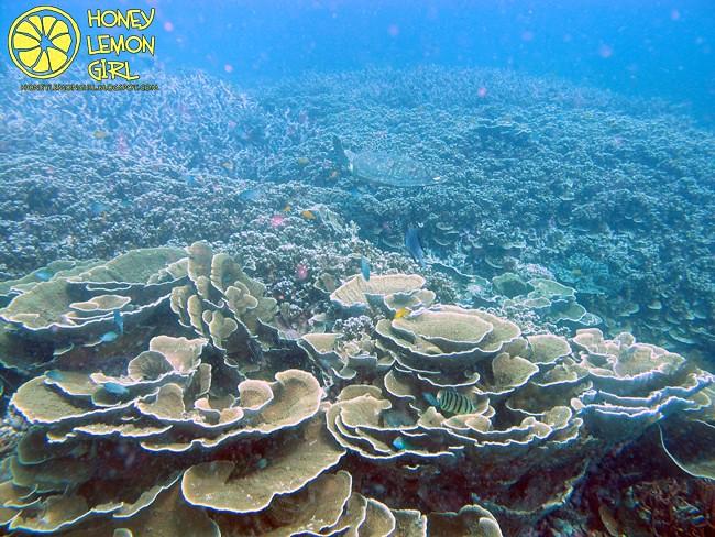 5D4N_Tioman Island_Diving-024