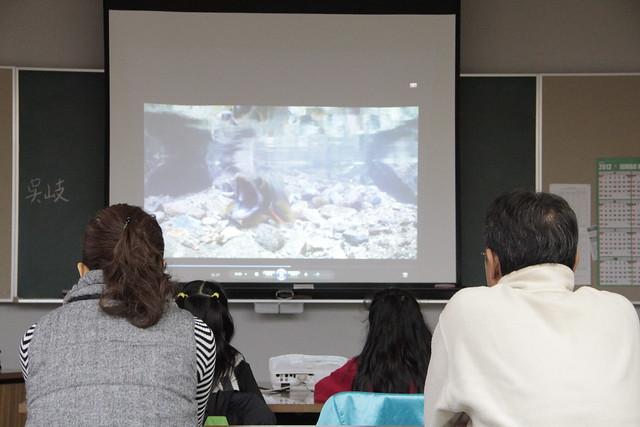 ゴギの産卵の動画は何度見ても神秘的!命をつなぐ姿に感動した.