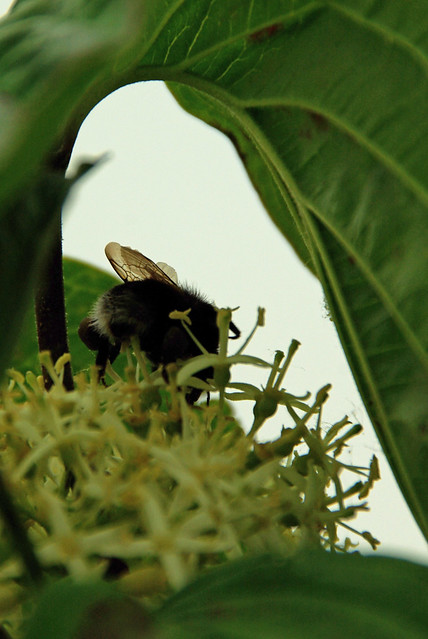 Bee in Leaf Arch