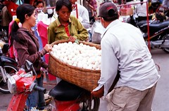 Lotta eggs