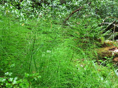 Muir Woods, Coastal Redwoods, green IMG_5025