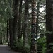 Yaadaas Crest Corner Pole, Sitka National Historical Park