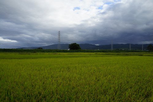 A Rice Field at Tenri, Nara, Japan