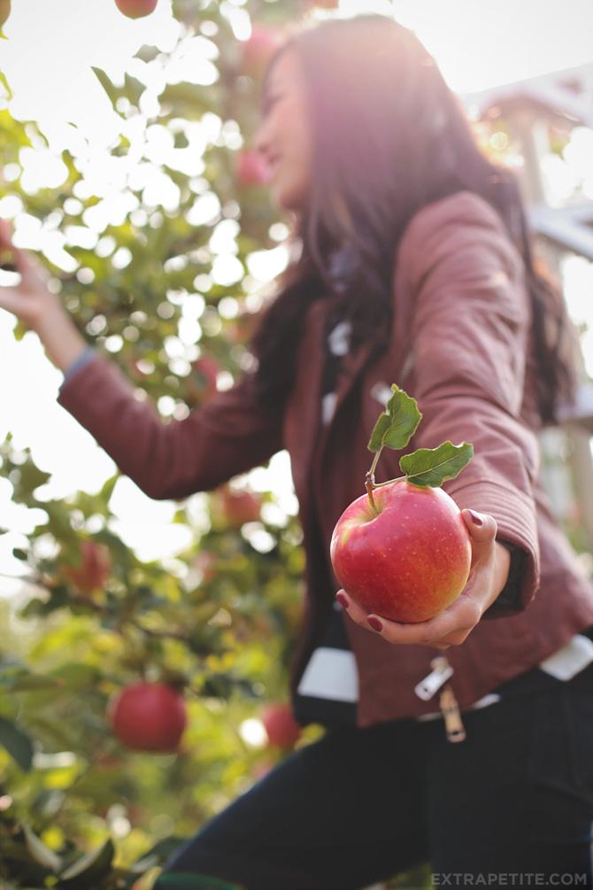 apple picking4