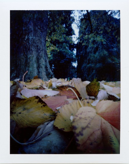 Fall leaves - Pinhole close-up