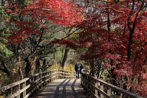 紅葉と木道