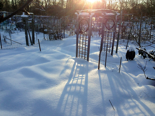 long shadows at garden plot