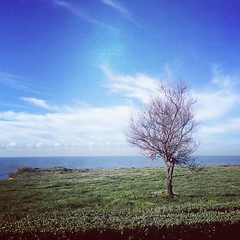 #visioni #anzio #alessandrogaziano #foto #followme #follow #albero #mare #acqua #sky #cielo