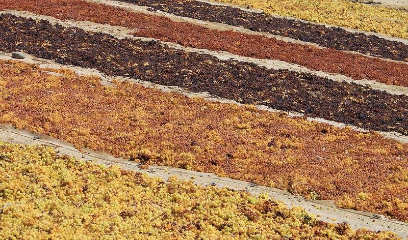 Drying grapes near Vicuna