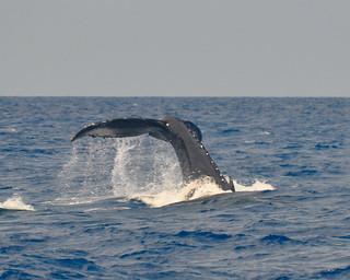 Tonga Offshore-29
