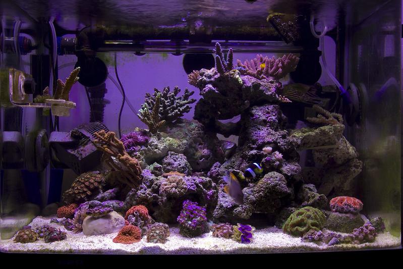Reefing The Australian Way Forums • View topic - Bangalang's