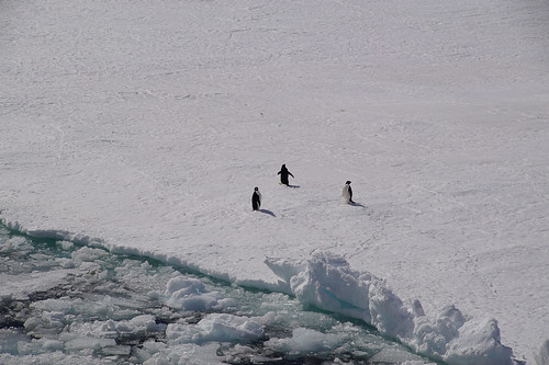683 Weddell Sea  met pinguins