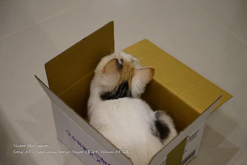 Miumiu 開箱了