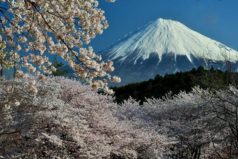 岩本山公園の桜2014