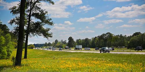 road trees green cars yellow spring highway texas traffic huntsville april trucks interstate wildflowers np roadside pinetrees springtime i45 wyojones