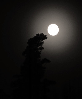 Reach for the moon...