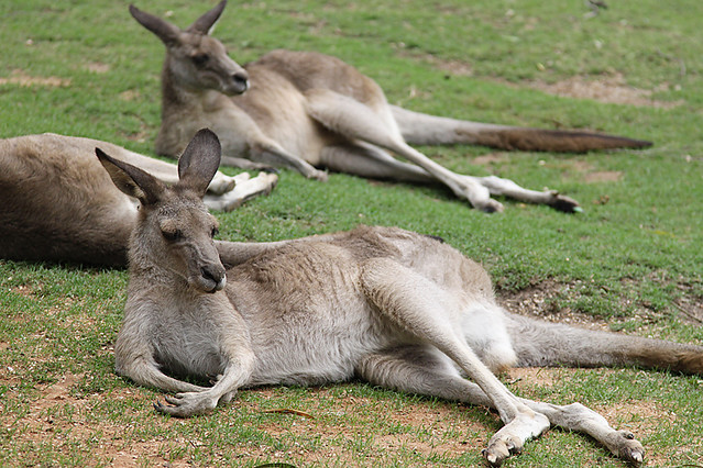 AustraliaDay2015-3