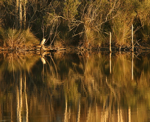 winter sunset lana heron nature water animal reflections pond wildlife waterfowl nycticoraxnycticorax gramlich canoneos5d lakestcatherine blackcrownednight lanagramlich dailynaturetnc15 jan182015