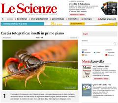Caccia fotografica: insetti in primo piano