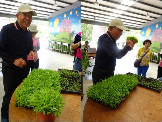 頭城農場植物 (2).jpg