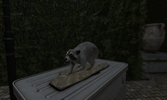 TRUE EVIL - a raccoon!