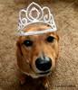 Princess Cody