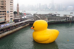 Florentijn Hofman: Rubber Duck: Hong Kong 2013 / Crazyisgood Art Installation / SML.20130508.6D.05448