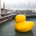 """Florentijn Hofman: Rubber Duck: Hong Kong 2013"" / Crazyisgood Art Installation / SML.20130508.6D.05448 by See-ming Lee 李思明 SML"