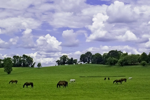 ranch sky horses field clouds rural landscape maryland pasture thumbsup baltimorecounty thebestofmimamorsgroups mygearandme zunikoff