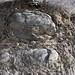 Rock erosion; entre Guevea de Humboldt y Santa María Guienagati, Distrito Tehuantepec, Región Istmo, Oaxaca, Mexico por Lon&Queta