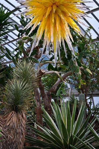 Phipps Conservatory - Desert Room