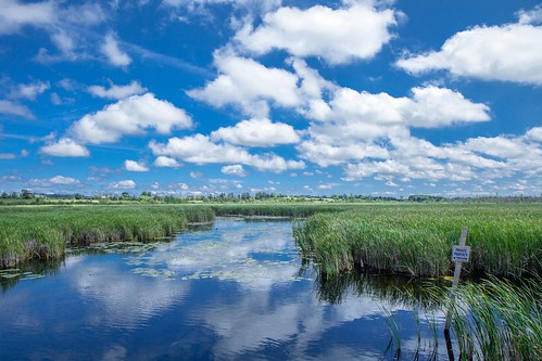 blue summer sky ontario canada water clouds reflections sunny swamp lillypad swallowtail uxbridge