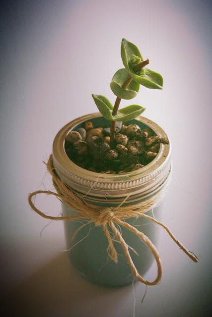 gift plant