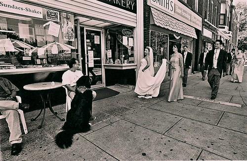 wedding_dogs