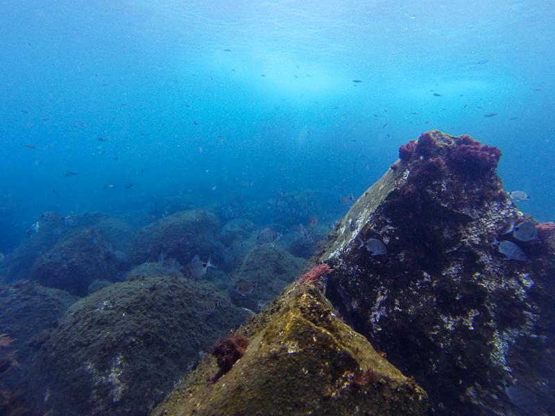 mergulho, ilha do pico