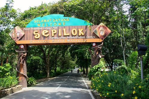 Welcome to Sepilok Orangutan Rehabilitation Centre
