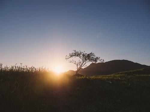 mountain tree sunrise lumix taiwan olympus hualien contrejour omd 花蓮 剪影 日出 六十石山 em5 晨昏 hualiencounty fulitownship panasonic1235f28