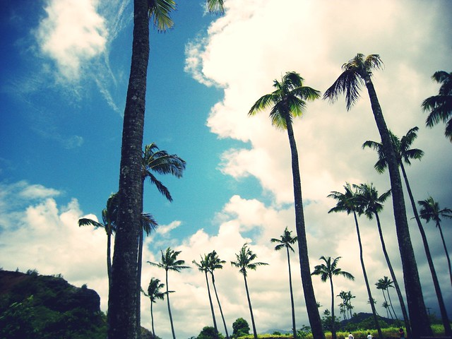 tall palms_effected