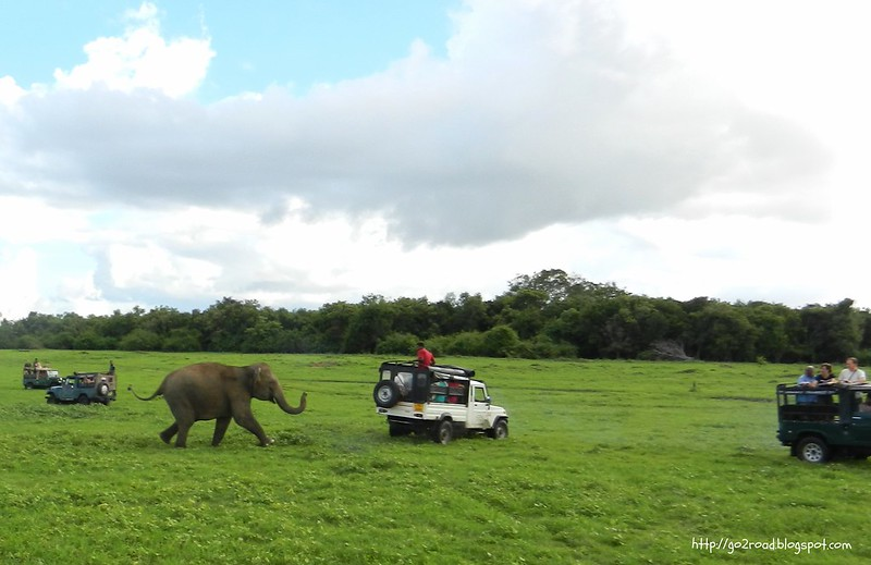 Слониха прогоняет джип