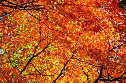 Autumn Fire 2