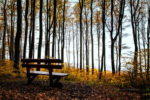 travel november autumn trees tree nature leaves norway horizontal forest canon bench norge leaf woods quiet natur nopeople autumncolors silence skog resting tre beech høst quietness trær larvik quietly leavs vestfold beechforest høstfarger canon5dmarkii autumnphotography
