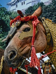 Horse wearing Bagu (horse tack) early to mid Edo period 17th-18th century CE Japan