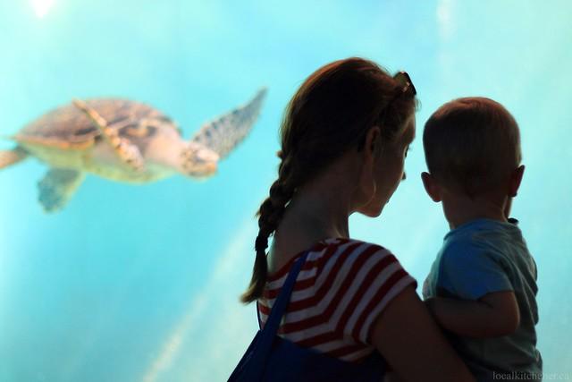 at el acuario