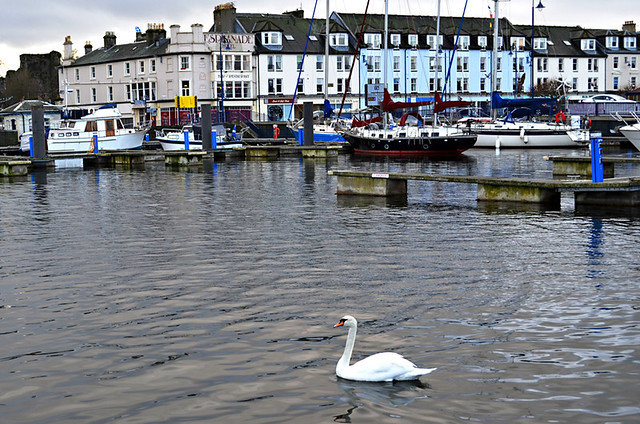 Swan, Rothesay, Isle of Bute, Scotland