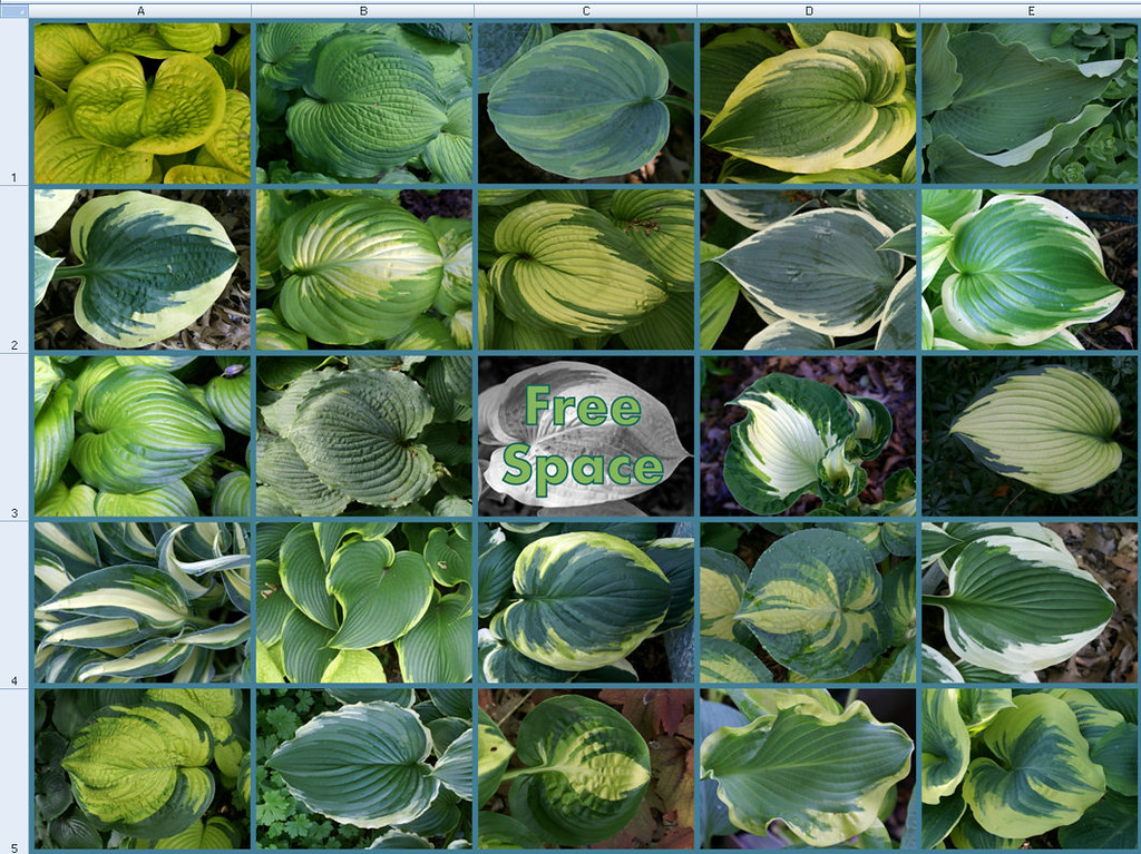 2014 Hosta Bingo Board