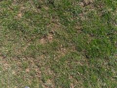 Grass_green-dirtpatches-sticks_wide.jpg