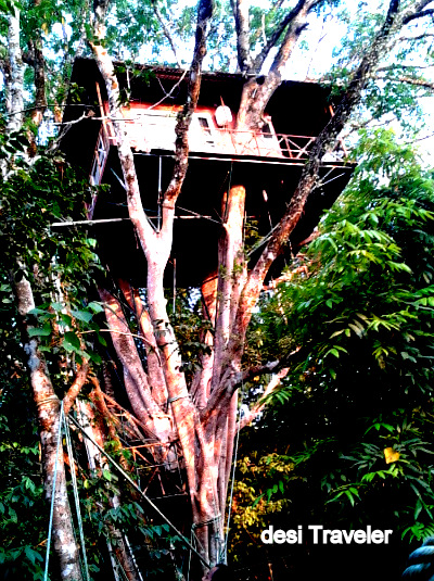 Tree house rain forest canopy