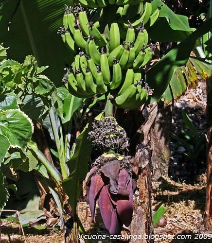 Vallet de Langevin - Banane
